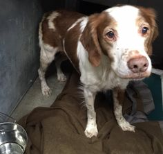 UP DATE:ADOPTED!!!!  FOUND ROAMING!!! Newfield Road, Torrington:  Call Torrington Animal Control: 860-485-9165