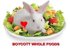 This pic says it all, no description required! Bunny Rabbit, Rabbits, Whole Food Recipes, Bunnies, Choices, Count, Household, Foods, Meat