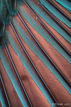 Close-up of a Kingfisher's wing feathers: the colours change with the light. It was photographed outside in morning light Patterns In Nature, Textures Patterns, Color Patterns, Beautiful Patterns, Organic Forms, Photo Macro, Design Textile, Fotografia Macro, Morning Light