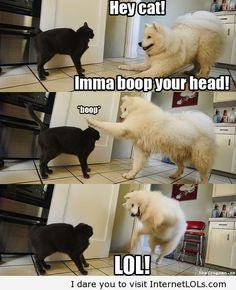 Hey Cat! LAWL!!!!
