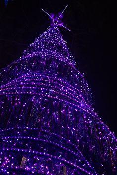 Purple Christmas.Pinterest