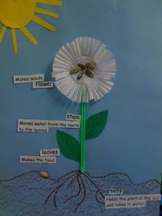 Cute activity for learning parts of a plant