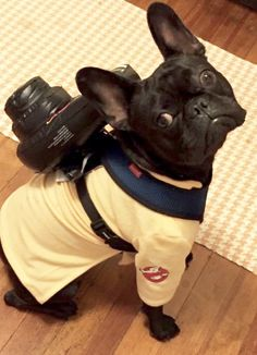 French Bulldog in a Ghostbusters Costume❤️