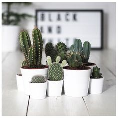 CACTI PARTY ✌️ #summer #nz #aus #cactus #cacti #spring #love #instalike #follow #fashion #paganmarie