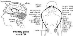 Lack Water, Kidney Problematic?
