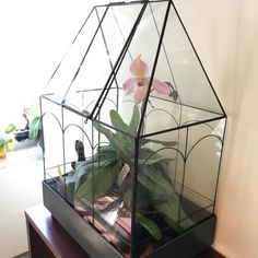 """@evaychan on Instagram: """"My wardian case with my favorite lady slipper orchid in bloom and collection of mini paphs. These iron and glass cases were used in the…"""" Rock Path, Lady Slipper Orchid, Wheelbarrow, Terrariums, Deco, Womens Slippers, Dream Life, Trellis, Bird Houses"""