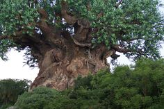 https://flic.kr/p/5aSxFJ | Very old amazing tree | Amazing tree  Pls do not use pictures or print without my permission