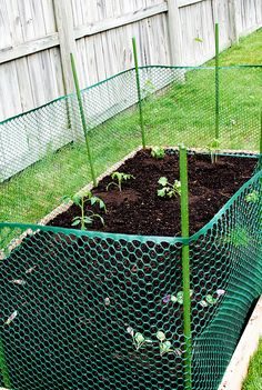DIY Raised Garden Bed Easy & cheap way to keep animals such as cats & dogs from going into your garden. If you have multiple raised beds, you can use this fencing all around the perimiter of your garden instead of using it on each one.DIY Raised Garden Be