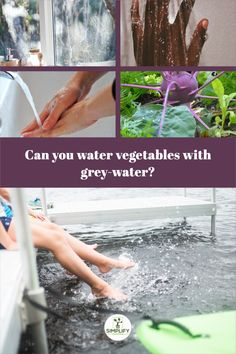 Greywater can be used to irrigate vegetable plants if it does not come into contact with the plants' edible sections. // Home Growing // Greywater Nutrients // Irrigation // #greywateruse #irrigationforvegetables #wateringplants Vegetable Garden Soil, Planting Vegetables, Organic Soil, Water Plants, Irrigation, Canning, Home Canning, Growing Vegetables, Aquatic Plants