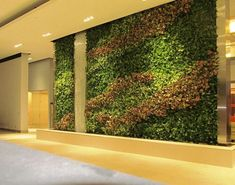A recent Ambius Living Green Wall project.