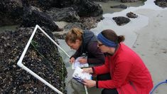 Marine Metre Squared (Mm2) is a nationwide citizen science project that encourages the public to gather information about biodiversity, distribution and abundance of intertidal species and in doing so, ask further questions about the state of the coastal environment.  Using Mm2, the New Zealand Marine Studies Centre (NZMSC) has focused participants attention on the issue of marine pests in the coastal space. Through educational programmes, teacher/community workshops, resource development…