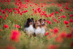 Vlčí mák Dog Photography, Fox, Animals, Animales, Animaux, Animal, Animais, Foxes
