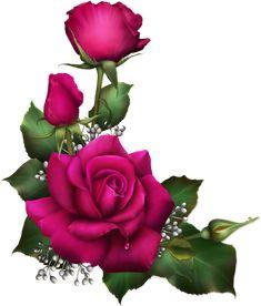 Flower Images, Flower Pictures, Beautiful Rose Flowers, Flower Phone Wallpaper, Flower Clipart, Flower Cards, Vintage Flowers, Flower Arrangements, Decoupage