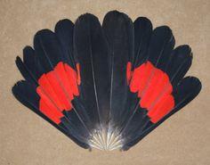 Black Cockatoos; Banksian, Red Tailed Black, Yellow Tailed Black, White Tailed Black Cockatoos