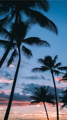 Palm Trees in Paradise iPhone Wallpapers