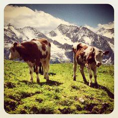 Instagram, Zillertal, Tirol, Österreich