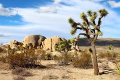 mojave desert rocks landscape wilderness