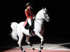 Lipizzaner Stallion http://horsebreedslist.com/horse_breed_images/54/big/lipizzaner-picture-7.jpg