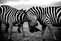 14 sitios web de fotografías open source de gran calidad