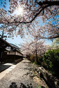 Tetsugaku no Michi (Philosopher's Walk), Kyoto, Japan