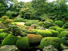 Japanese pruning & topiary (Ueki no Te Ire)