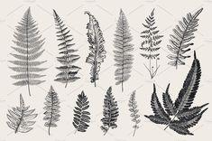 15 Ideas Vintage Tattoo Flower Black Botanical Illustration For 2019 Flower Tattoos, Leaf Tattoos, Small Tattoos, Sleeve Tattoos, Botanical Tattoo, Botanical Drawings, Pretty Tattoos, Beautiful Tattoos, Botanical Illustration Black And White
