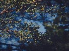Inspirational photography Dream photo with by Hextrovert on Etsy