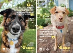 The Shelter Pet Project has recently launched a new informational and PSA campaign designed to help homeless pets and loving homes find one another.