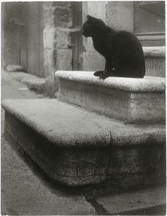 Black Cat on Steps cat photography by Brassai - aka Gyula Halasz Cat Photography, Vintage Photography, Street Photography, Crazy Cat Lady, Crazy Cats, Brassai, Cat Boarding, Vintage Cat, Belle Photo