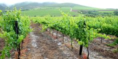 Regional Prerequisites: What It Really Takes To Grow Wine Grapes | VinePair