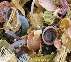 Fossilised Diatoms, Sem Canvas Print / Canvas Art by Steve Gschmeissner