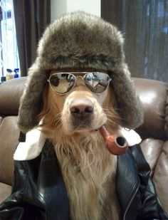 fighter-pilot dog.... one cool canine!!