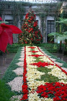 Patchwork of poinsettias and other flowers with outdoor Christmas tree