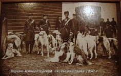 z- Borzois- Russian Hunting Kennel, 1890