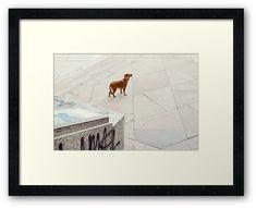 #photography #photo #art #print #artprint #streetphotography #streetphoto #color #colour #colorphoto #dogs #pets #doggie #street #frame #framedprint #findyourthing #photographs #artforsale #wallart #prague #czechia #czechrepublic #animals #alone #lonely #lost #reddog #gingerdog