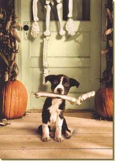 Funny  dog; Swag: http://www.cafepress.com/tlconline
