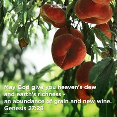 Give praise for God's bounty. #Harvest #Abundance #VerseOfTheDay #HelpingYouLiveWell Verse Of The Day, Bible Scriptures, Abundance, Harvest, Heaven, Earth, God, Dios, Sky