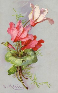 Flowers by Katarina KLEIN. Discussion on LiveInternet - Russian Service Online Diaries