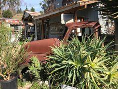 Cambria California, Plants, Planters, Plant, Planting, Planets