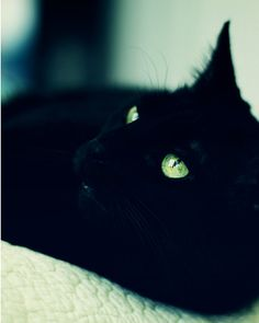 I love black cats! <3