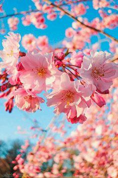 The Sweet Taste of Spring in Japan Frühling Wallpaper, Floral Wallpaper Iphone, Spring Wallpaper, Aesthetic Iphone Wallpaper, Flower Wallpaper, Aesthetic Wallpapers, Wallpaper Backgrounds, Beautiful Flowers Wallpapers, Beautiful Nature Wallpaper