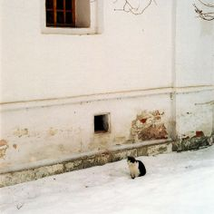Cat in the snow in Moscow, Russia