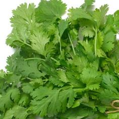 Fresh cilantro is the herb of choice for aggravated pitta. It is hypoallergenic, cooling, improves eyesight, and can be found just about everywhere. It also softens stool, and is a diuretic that clears inflammation from the urinary tract. Cilantro aids digestion, acts as a carminative preventing gas, and burns ama (residue and waste products).