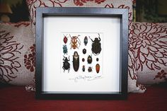 Artframe with real insects : Topquality display with beautiful mosaic with real insects FREE SHIPPING by Alanscollectibles on Etsy