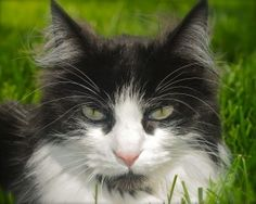 Cat Story Confessions Of A Calendar Kitty #cats #cat lifestyle
