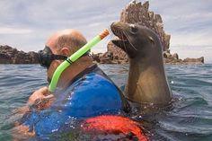 has anyone seen a seal?