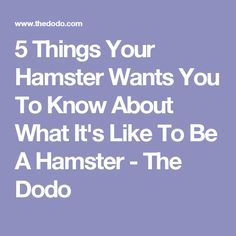 5 Things Your Hamster Wants You To Know About What It's Like To Be A Hamster - The Dodo
