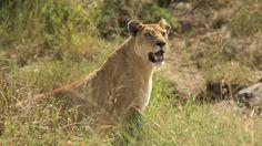 JACEK PAWLICKI PICTURES: Tanzania, Serengeti, May 2016