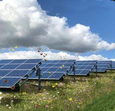 Onderzoek optimalisering biodiversiteit in zonneparken SMARTLAND landscape architects, Shell, Naturalis Biodiversity Center