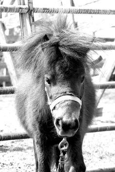 Kene's miniature horse, Mocha